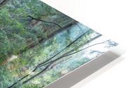 Ash Cave apmi 1642 HD Metal print