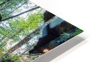 Lodge Falls apmi 1649 HD Metal print