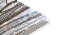 Mystic Forest apmi 1620 HD Metal print