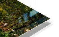 Red Creek Aspens apmi 1769 HD Metal print