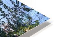 Woods in the Snow HD Metal print
