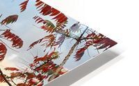 Autumn in New York  HD Metal print