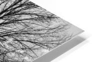 L'arbre de vie Impression metal HD