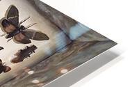 Beetles HD Metal print