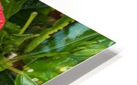 Rain & Nature HD Metal print