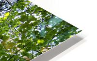 Skyview Canopy HD Metal print
