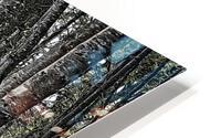 Boardwalk in the Woods HD Metal print