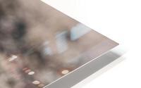 Lonely Sandpiper HD Metal print