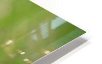 Toothpick Goose HD Metal print
