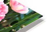Double Pink Tulips HD Metal print
