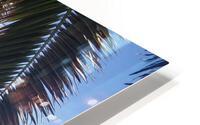 inbound4383642754042874801 HD Metal print