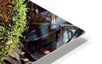 Mossy Stump HD Metal print