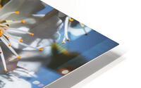 Blossom & The Bee HD Metal print