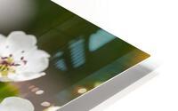 Poirier en fleurs 2 HD Metal print