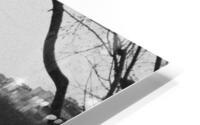 IMG 0697 HD Metal print
