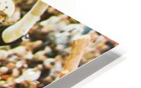 1971 Notre Dame vs. North Carolina Football Ticket Canvas HD Metal print