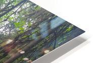 Grandmother Tree HD Metal print