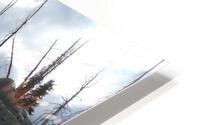 Easy Climb to Grouse Mountain HD Metal print