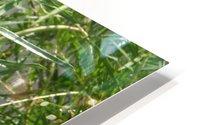 hummingbirdindesertwillow lrg HD Metal print