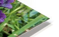 Two Iris HD Metal print