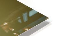 Agapanthus HD Metal print