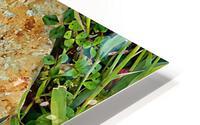 Brown Sandstone Rock With Grass HD Metal print