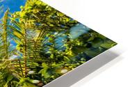 Palm and tropical beach HD Metal print