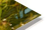 IMG_1411 2 HD Metal print