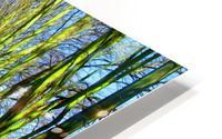 Summer Avenue HD Metal print