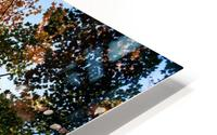 Autumn Trees Low-Angle HD Metal print