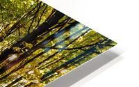 Tree Lined Road In Autumn HD Metal print