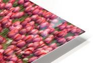Tulips HD Metal print