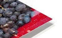 A bowl of blueberries;Alaska united states of america HD Metal print