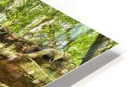 Rainforest in Avatar Grove near Tofino; British Columbia, Canada HD Metal print