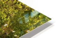 The Path to Fairytales, Ramsons Wood, Lancashire, UK HD Metal print