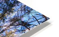 Winter. Forest. Shadow HD Metal print