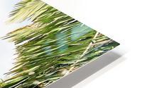 Nevis cactus HD Metal print