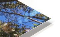 Tree Tops Near Grassi Lake Trail, Alberta HD Metal print