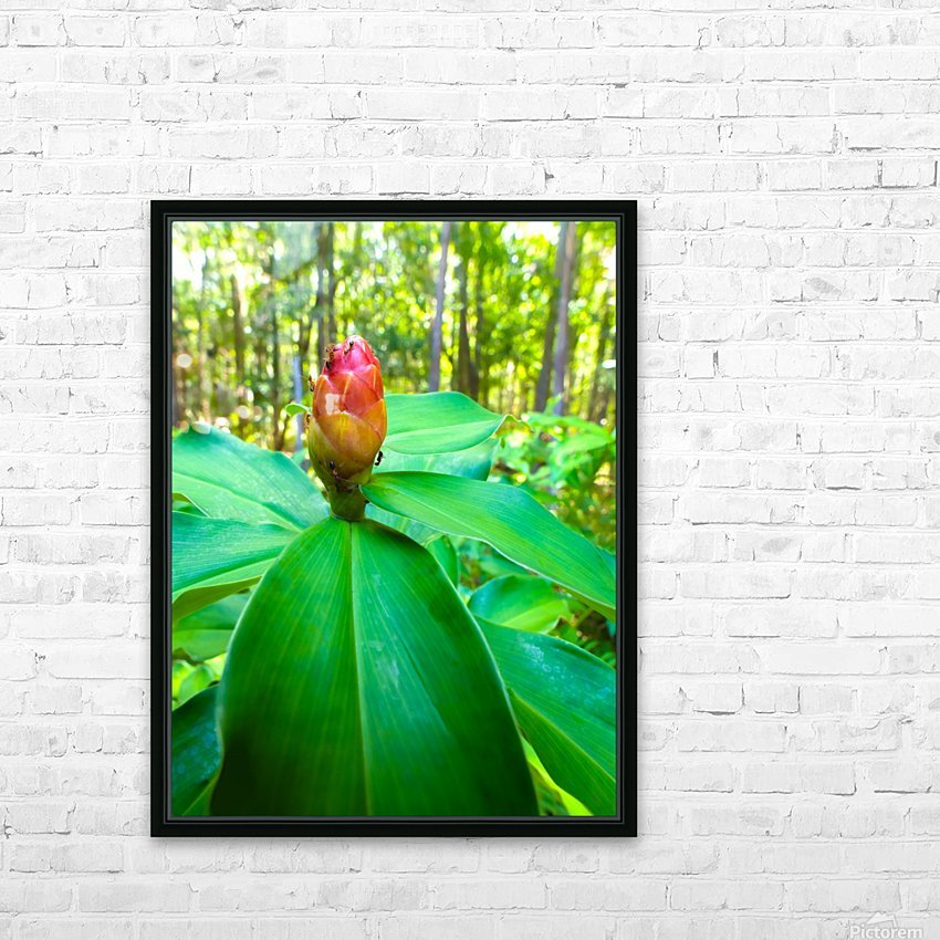 HDR Ants on a ginger flower HD Sublimation Metal print with Decorating Float Frame (BOX)