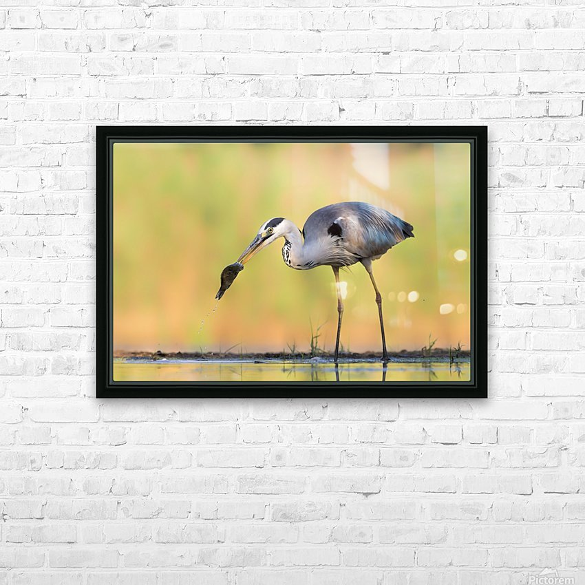 Morning Catch HD Sublimation Metal print with Decorating Float Frame (BOX)