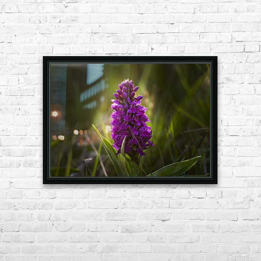 Close up of a pink hyacinth; South Shields, Tyne and Wear, England HD Sublimation Metal print with Decorating Float Frame (BOX)
