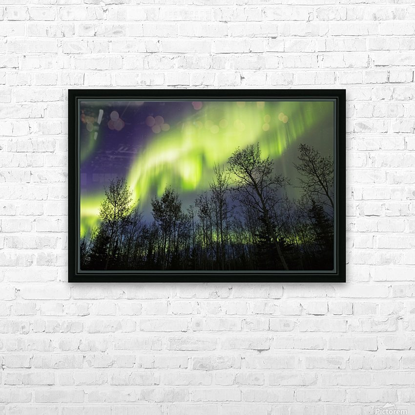 Aurora borealis over silhouetted trees; Alaska, United States of America HD Sublimation Metal print with Decorating Float Frame (BOX)
