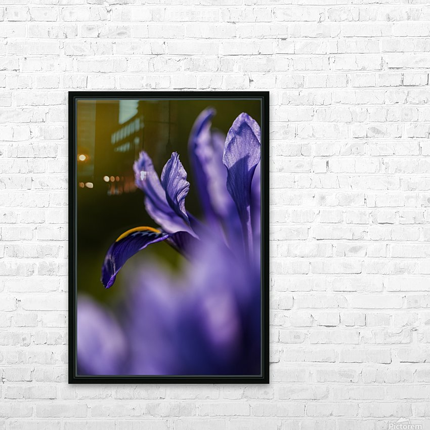 The dwarf Iris is one of the first flowers to bloom in the spring; Oregon, United States of America HD Sublimation Metal print with Decorating Float Frame (BOX)