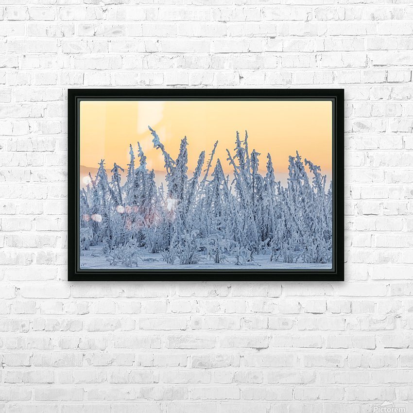 Hoarfrost covers black spruce trees as ground fog and dusk descend on Palmer Hay Flats in South-central Alaska in winter; Alaska, United States of America HD Sublimation Metal print with Decorating Float Frame (BOX)