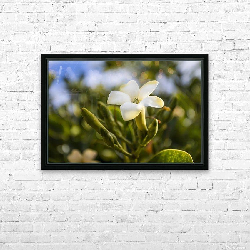 Close-up of puakenikeni flower; Lanai, Hawaii, United States of America HD Sublimation Metal print with Decorating Float Frame (BOX)