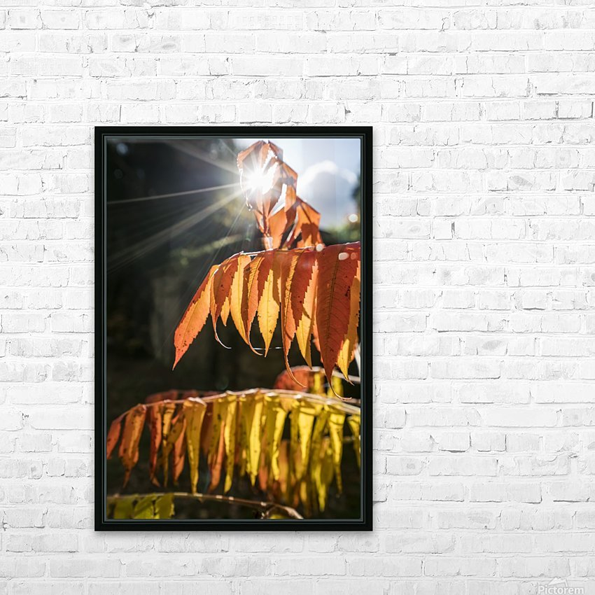 Brown leaves drooping from their branches backlit by the sunlight; North Yorkshire, England HD Sublimation Metal print with Decorating Float Frame (BOX)