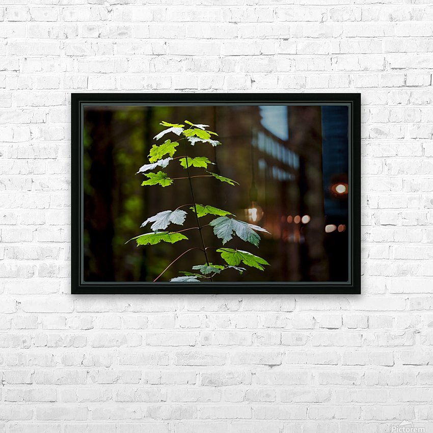 A new green plant grows up towards the sunlight; North Yorkshire, England HD Sublimation Metal print with Decorating Float Frame (BOX)