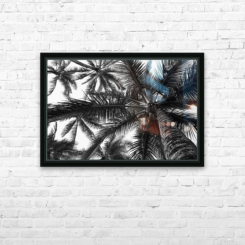 Low angle view of coconut palm trees in black and white; Honolulu, Oahu, Hawaii, United States of America HD Sublimation Metal print with Decorating Float Frame (BOX)