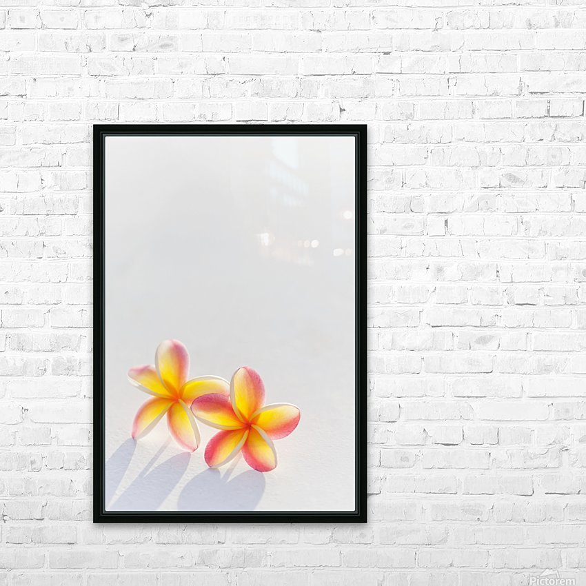 A pair of beautiful yellow and pink Plumeria flowers together (Apocynaceae) on a white background; Honolulu, Oahu, Hawaii, United States of America HD Sublimation Metal print with Decorating Float Frame (BOX)