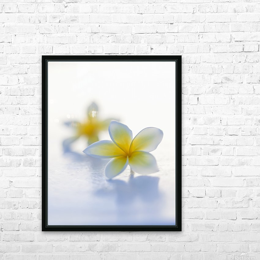Close-up of two beautiful yellow Plumeria flowers (Apocynaceae) in soft focus; Honolulu, Oahu, Hawaii, United States of America HD Sublimation Metal print with Decorating Float Frame (BOX)